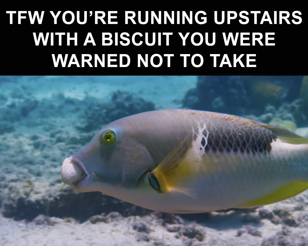 Just 12 Relatable Memes From Blue Planet Ii Joe Co Uk
