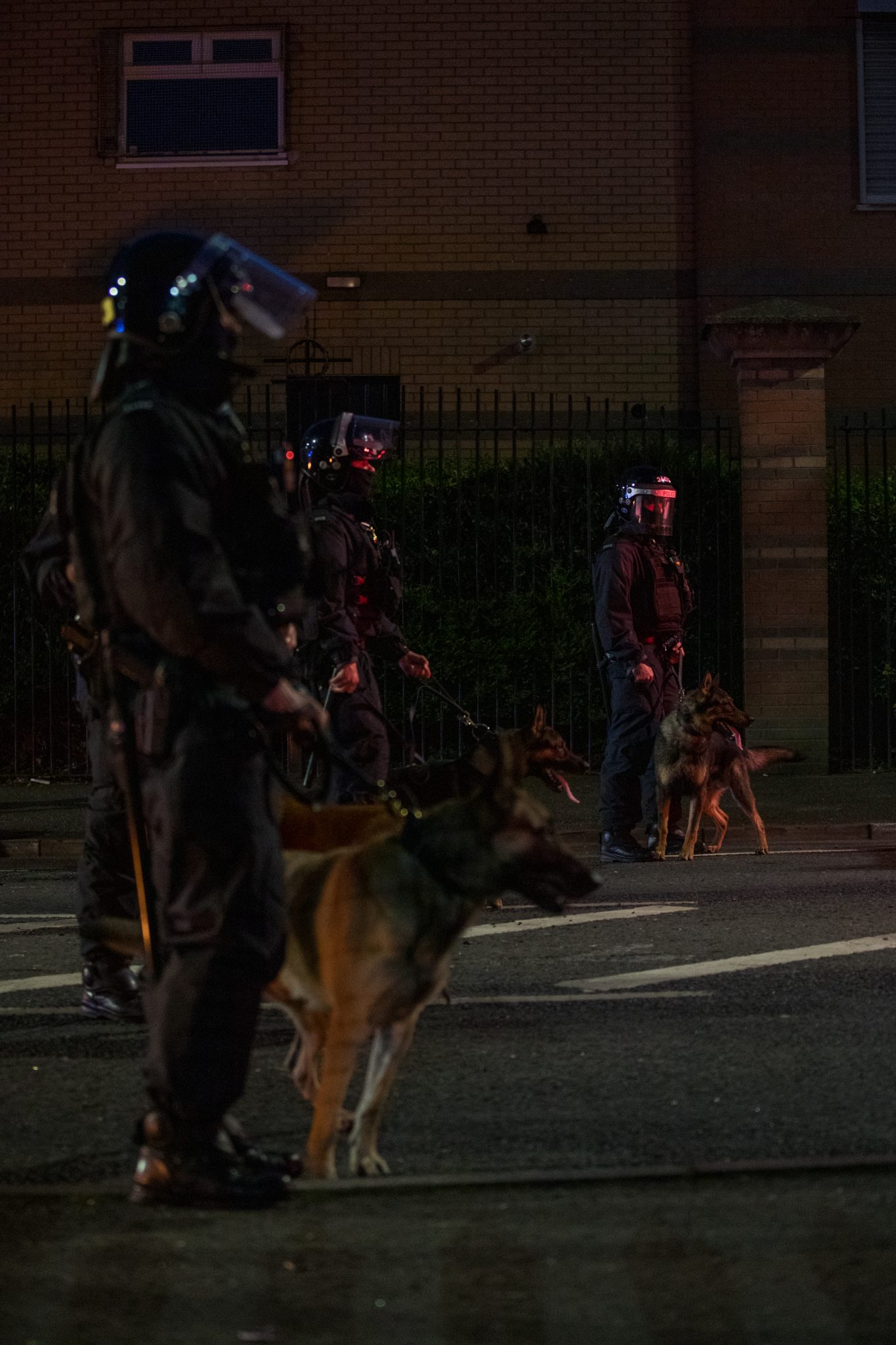 A line of police dogs in a Belfast street